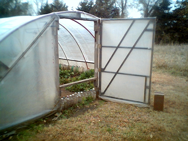 Current hoophouse (greenhouse) pictures
